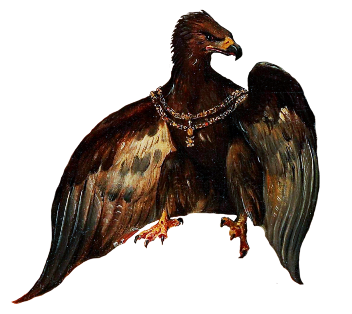 kaukasian eagle WEB.png